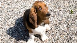 stevnshundehotel-hundepension