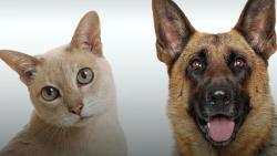 asserholm-hunde-og-kattepension-hundepension