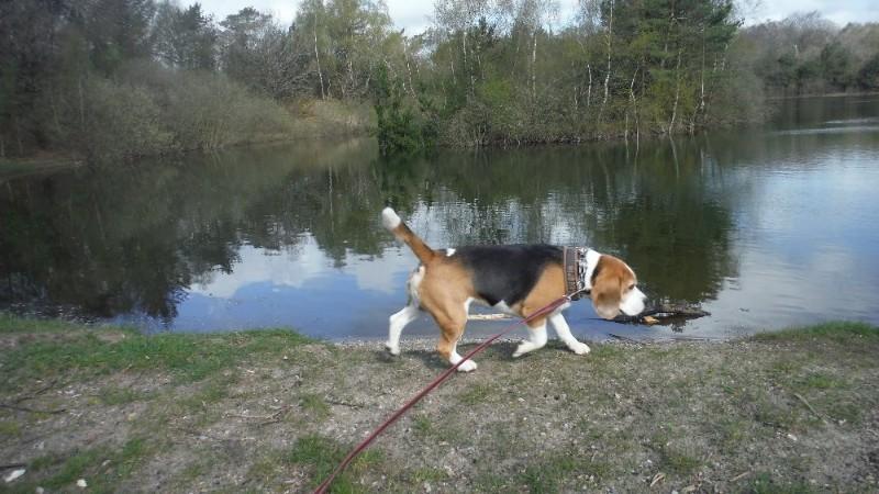 det-lille-hundehotel-hundepension